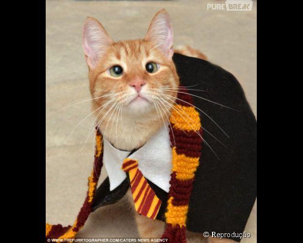 Um gato bruxo, estudante de Hogwarts, mais especificamente Lufa-Lufa