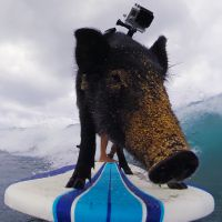 10 melhores filmagens alucinantes com animais e as câmeras GoPro!