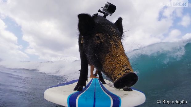 7 melhores filmagens envolvendo animais e as câmeras GoPro!