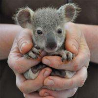 30 filhotes de animais mais fofos do mundo e que podem caber na palma da sua mão!