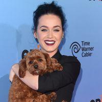 Katy Perry fala sobre ex Russel Brand e diz que vai dar um tempo na carreira quando tiver filhos