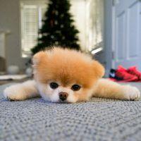 10 coisas que você faz com o seu cãozinho e ele provavelmente não gosta!