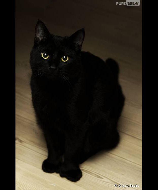Não acreditar em sorte ou azar é fácil. Quero ver passar por um gato preto...
