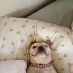 Hora de dormir: 15 cachorros que sabem aproveitar o momento de tirar uma boa soneca!