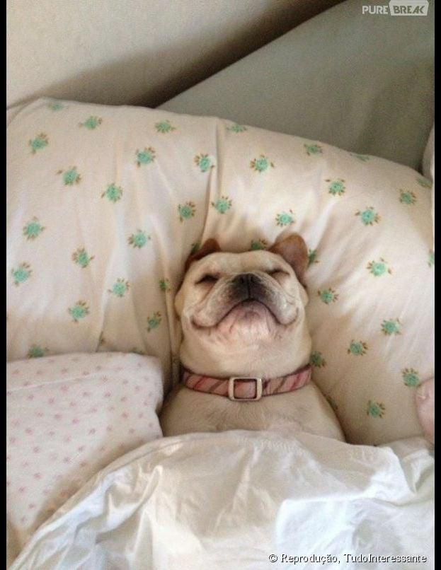 Esse cachorro parece estar super relaxado. Que inveja!