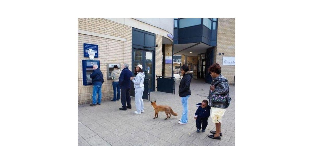As raposas tamb m precisam sacar dinheiro no banco Sacar dinheiro no exterior banco do brasil