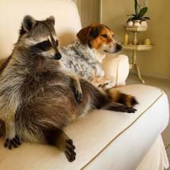 Veja 15 animais que não sabem o que estão fazendo da vida!