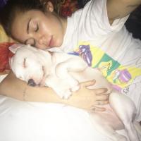 Miley Cyrus adota cachorro abandonado, tira selfies e já escolhe um nome: Milky!