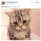 Memes Black Friday no Brasil: veja as reações mais engraçados das redes sociais!