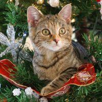 5 dicas infalíveis para evitar os momentos mais constrangedores da noite de Natal!