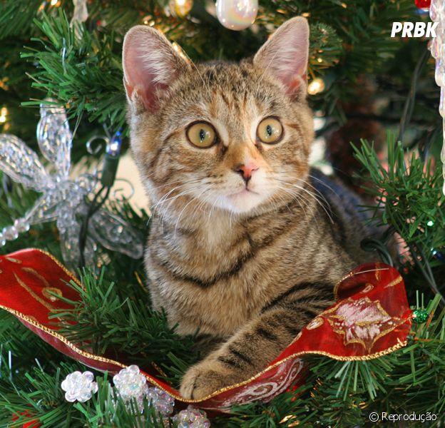 5 dicas infalíveis para evitar os mais diversos perrengues na noite de Natal