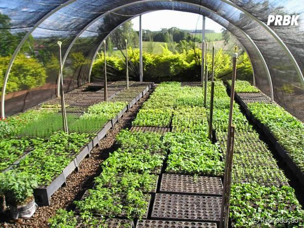 A Silvicultura é um curso perfeito para quem gosta do meio-ambiente