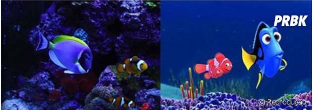 Nemo e Dory também existem na vida real!