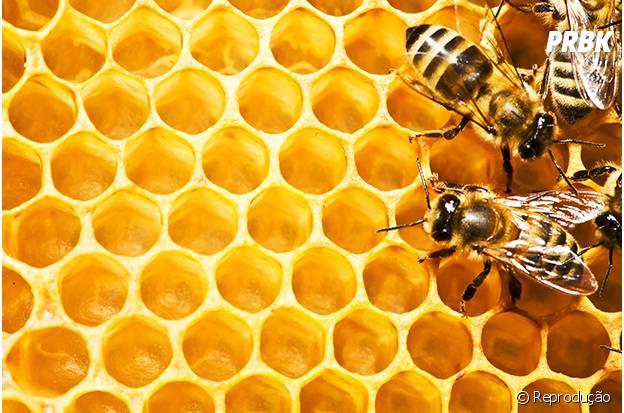 O mel nunca estraga!