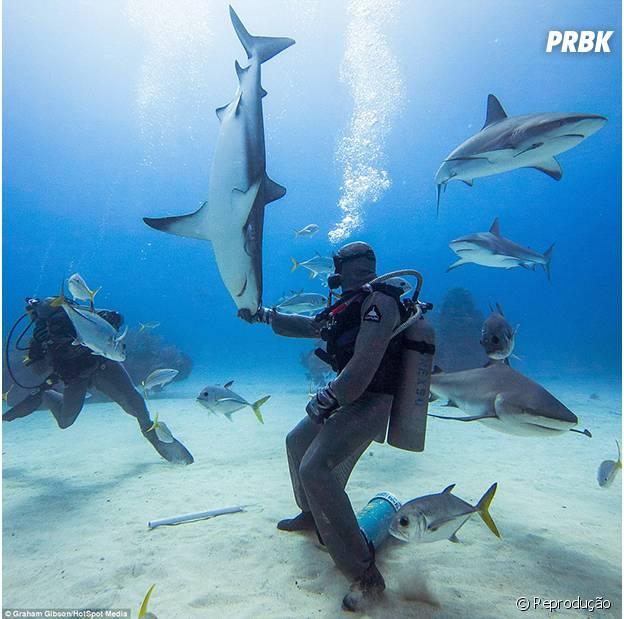 Tubarão hipnotizado por mergulhador