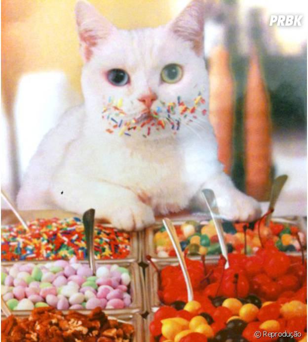 Gatos não sentem gosto de doces!