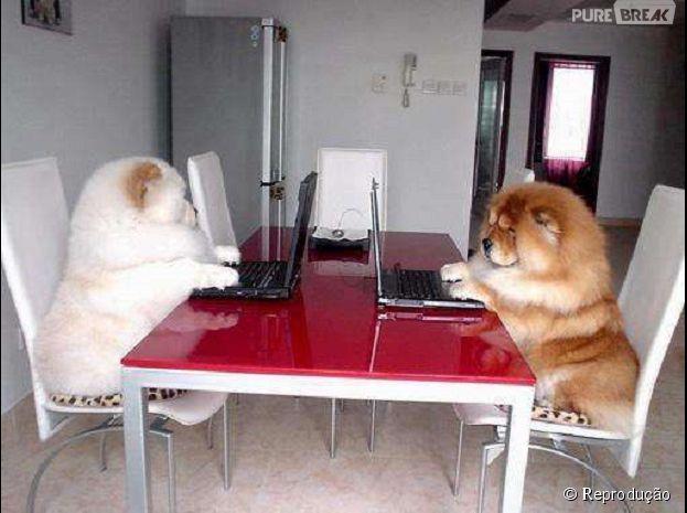Vamos começar a reunião?