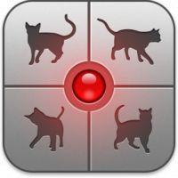 Existe um aplicativo que permite conversar com gatos e isso era tudo que a gente queria!