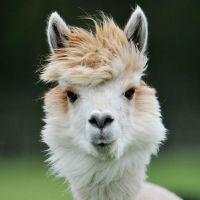 """12 animais que tem um """"cabelo"""" de causar inveja em muito humano"""