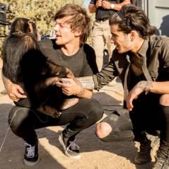 Novo clipe do One Direction ganha participação inusitada: Um chimpanzé!