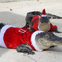 12 animais que já estão em clima de Natal