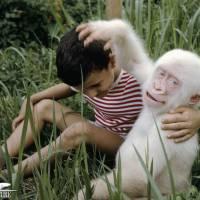Animais albinos: 20 espécies de um jeito que você nunca viu!