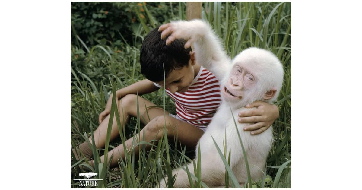 Albinos in anatomy