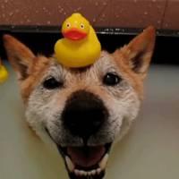 Hora do banho: 18 animais que não têm problema em lidar com a água!