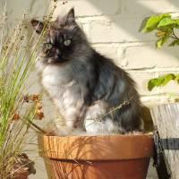 Dia Mundial do Gato: 20 fotos de felinos que pensam ser plantas de verdade!