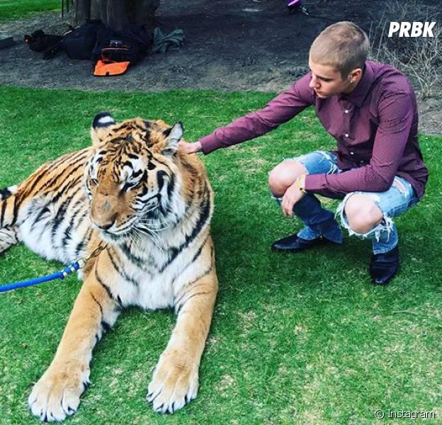 Justin Bieber recebe críticas da ONG PETA ao posar com tigre
