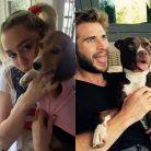 Miley Cyrus, Liam Hemsworth e as melhores fotos do casal com os seus cachorros no Instagram!