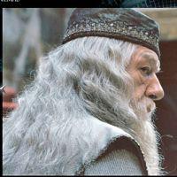 """De """"Animais Fantásticos e Onde Habitam"""": Alvo Dumbledore é confirmado para segundo filme!"""