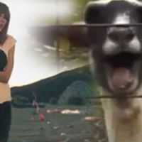 Viral: Cabras fazem participação em músicas de Taylor Swift e Justin Bieber