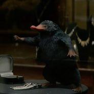 """De """"Animais Fantásticos e Onde Habitam"""": conheça as criaturas mágicas do filme!"""