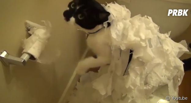 Cachorro que comeu papel higiênico