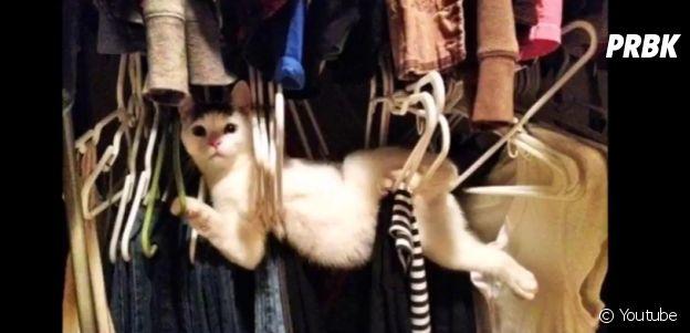 Gato que se pendurou no cabide