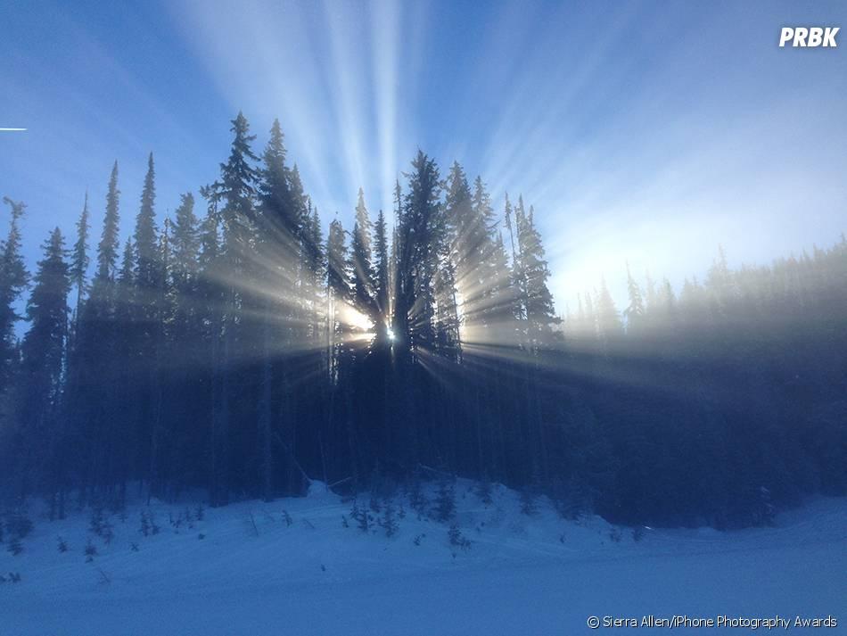 Os raios de sol saindo do meio das árvores criou um belo cenário pra uma foto!