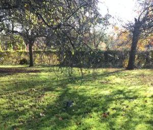 Larissa Manoela tira fotos em parque conhecido de Londres