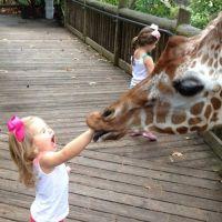 17 vezes em que os animais perderam a paciência com as crianças