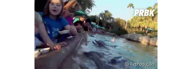 Golfinho tentando pegar comida na mão da menina