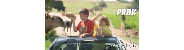 Camelo tentando pegar crianças