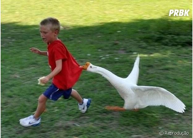 Menininho correndo do ganso