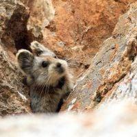 """Conhece o """"Coelho Mágico""""? Veja esse e outros animais que são os mais fofos do mundo!"""