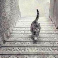 Gato está subindo ou descendo as escadas? Conheça a nova brincadeira sensação da internet!