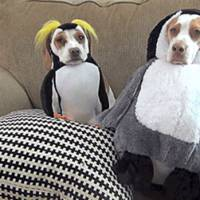 Mau humor? Veja 12 cachorros que não estão nos seus melhores dias!