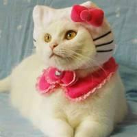 15 fotos de gatinhos fantasiados de outros animais que estão prontos para enganar muita gente!