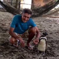 Pinguim viaja 3 mil km para encontrar homem que salvou sua vida! Confira a história completa