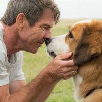 """Filme """"Quatro Vidas de um Cachorro"""": cão é maltratado nos bastidores e vídeo choca a internet!"""