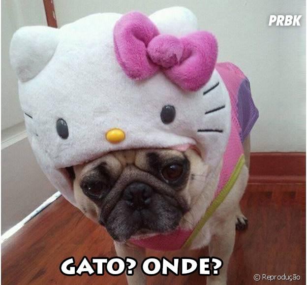 Hello Kitty é uma gata ou não?
