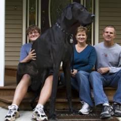 15 cachorros que não aceitaram o tamanho que têm